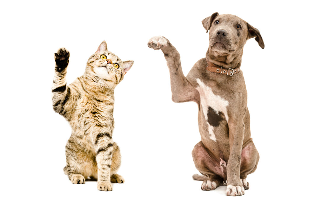 The Human-Animal Connection – Are You Teaching Your Animal To Act Sick?
